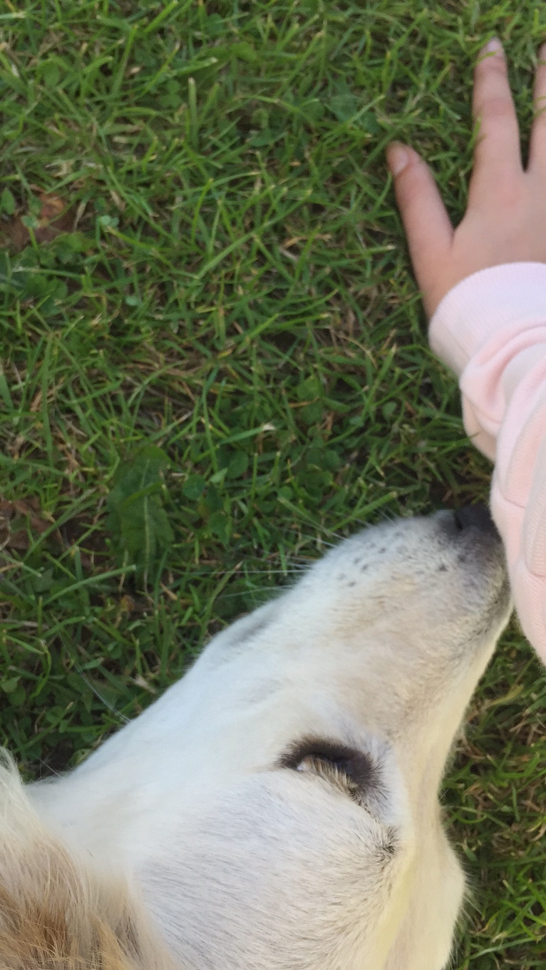 dog sniffing hand on grass