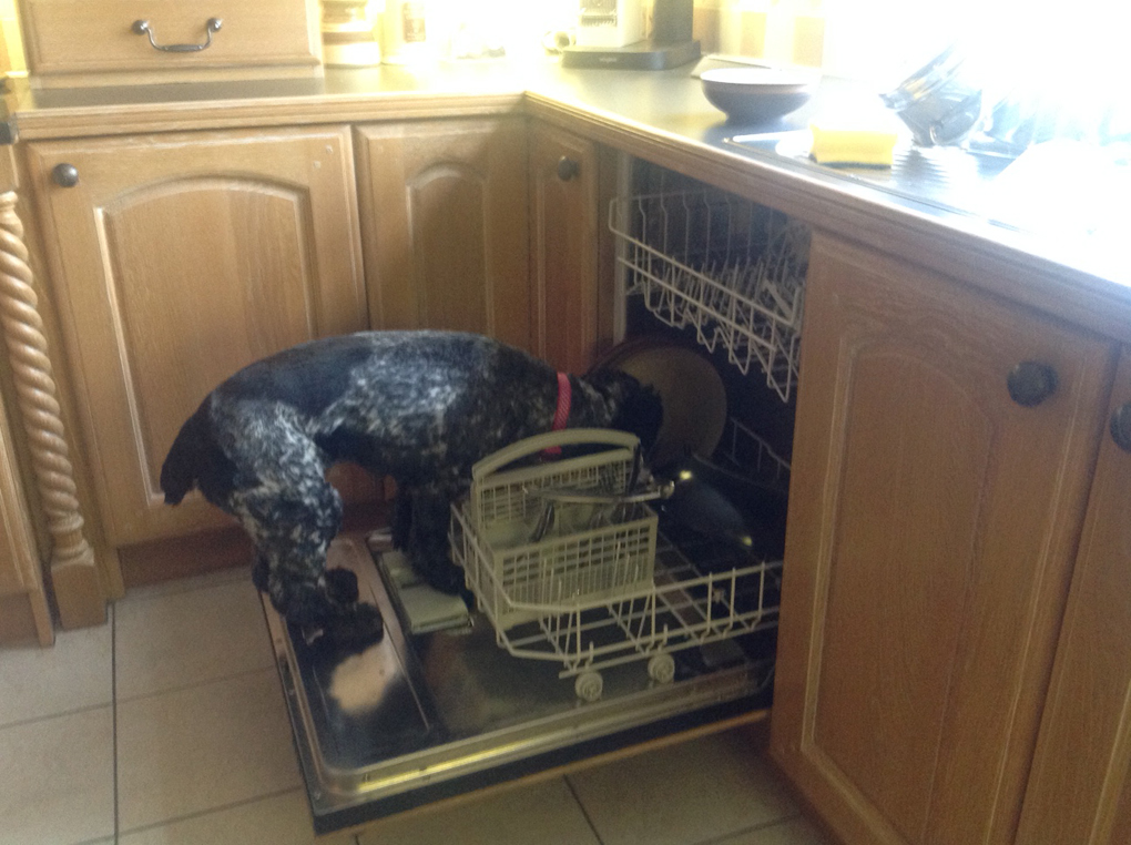 dog in the dishwasher licking plates