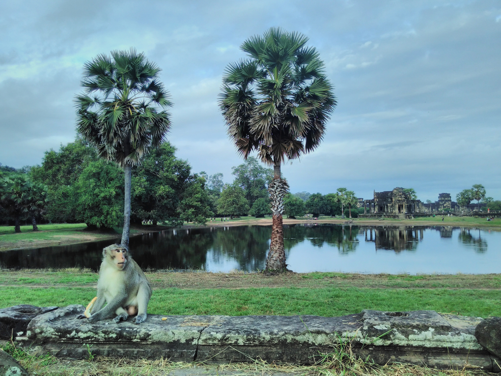 monkey by a pond