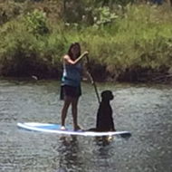 dog on a canoe