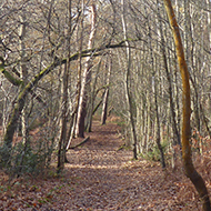 path through woodlands in winter