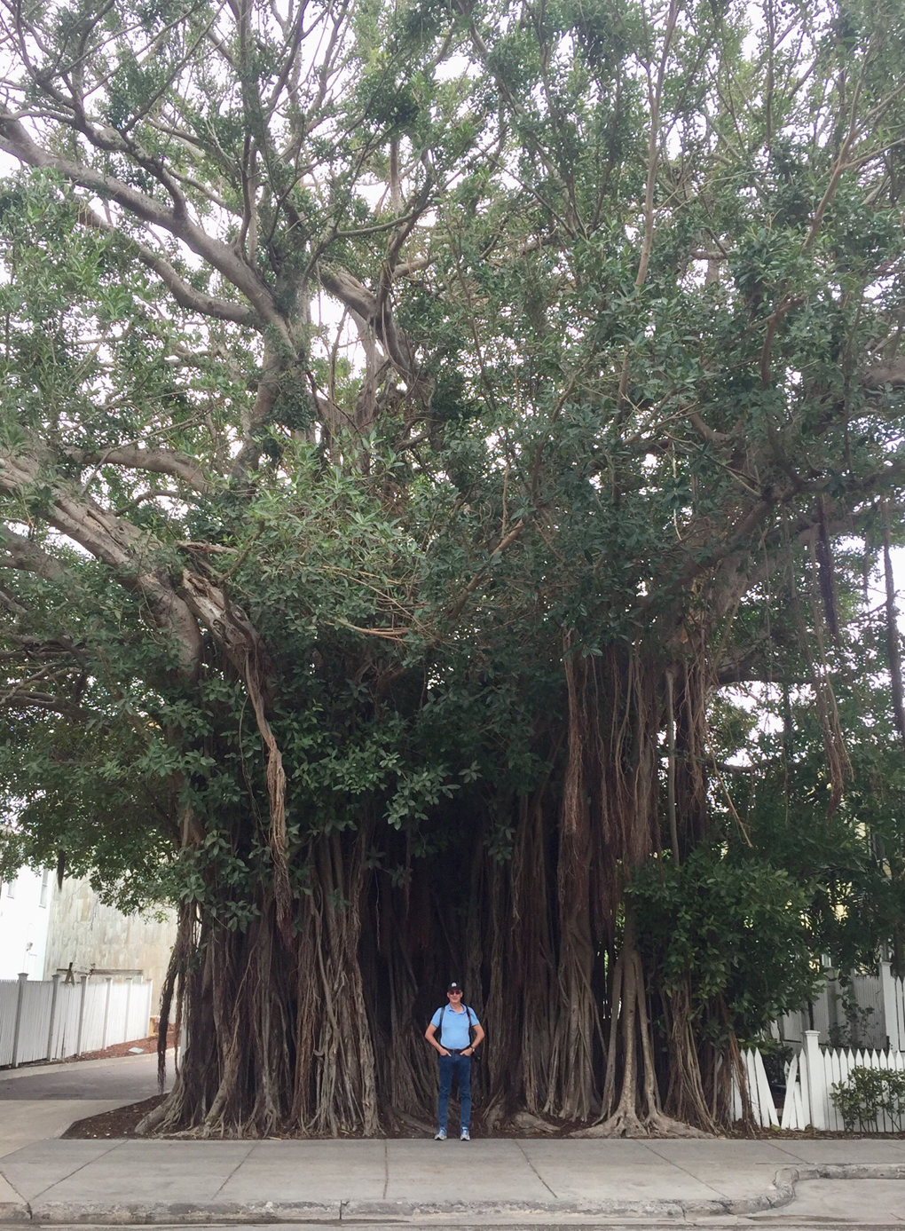 man in front of strangler fig