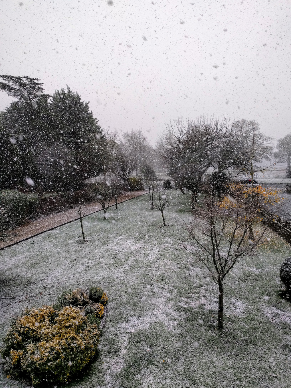 snow falling over a front garden in mid-November.