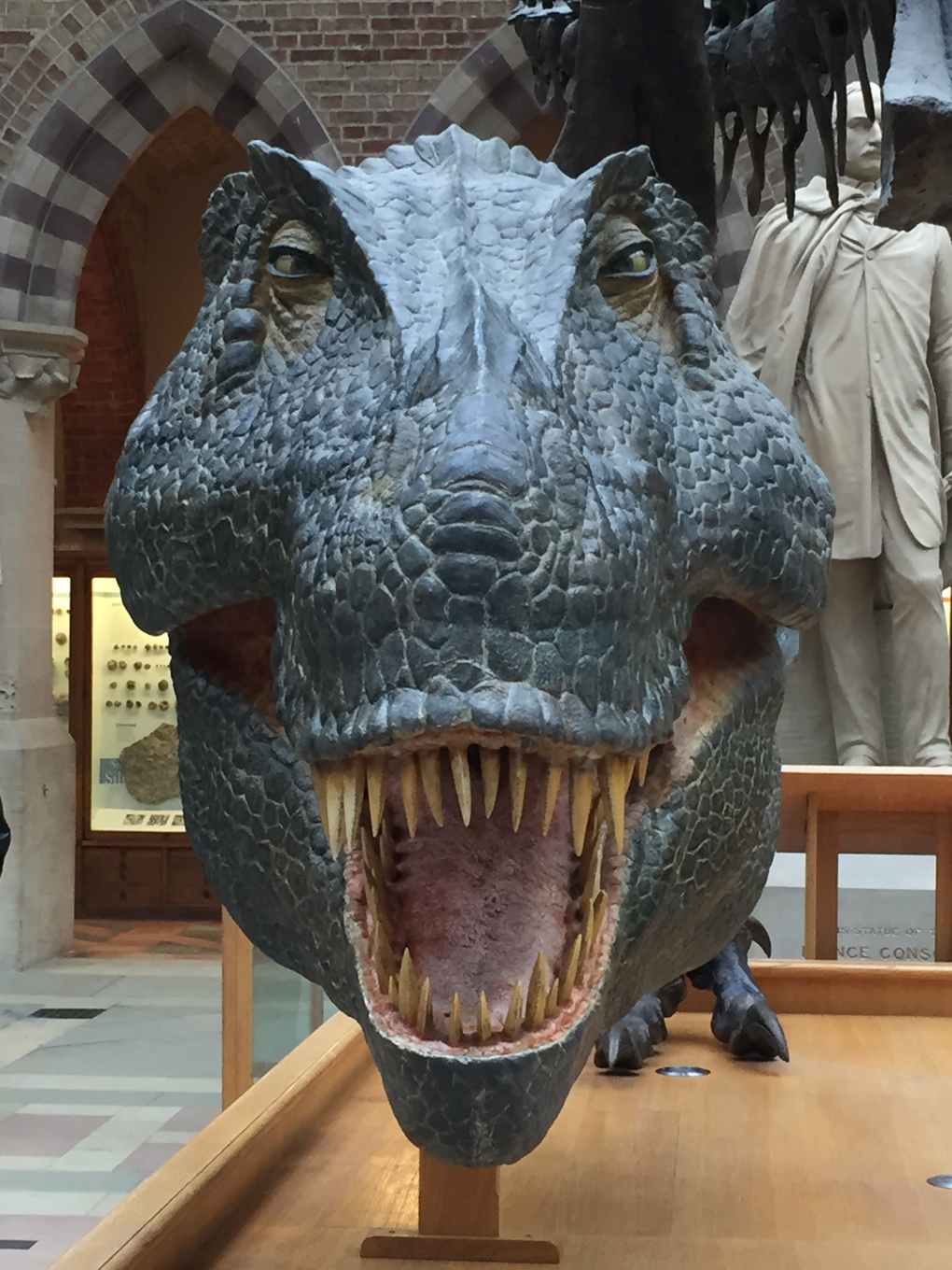 A giant T. Rex head model, viewed face-on