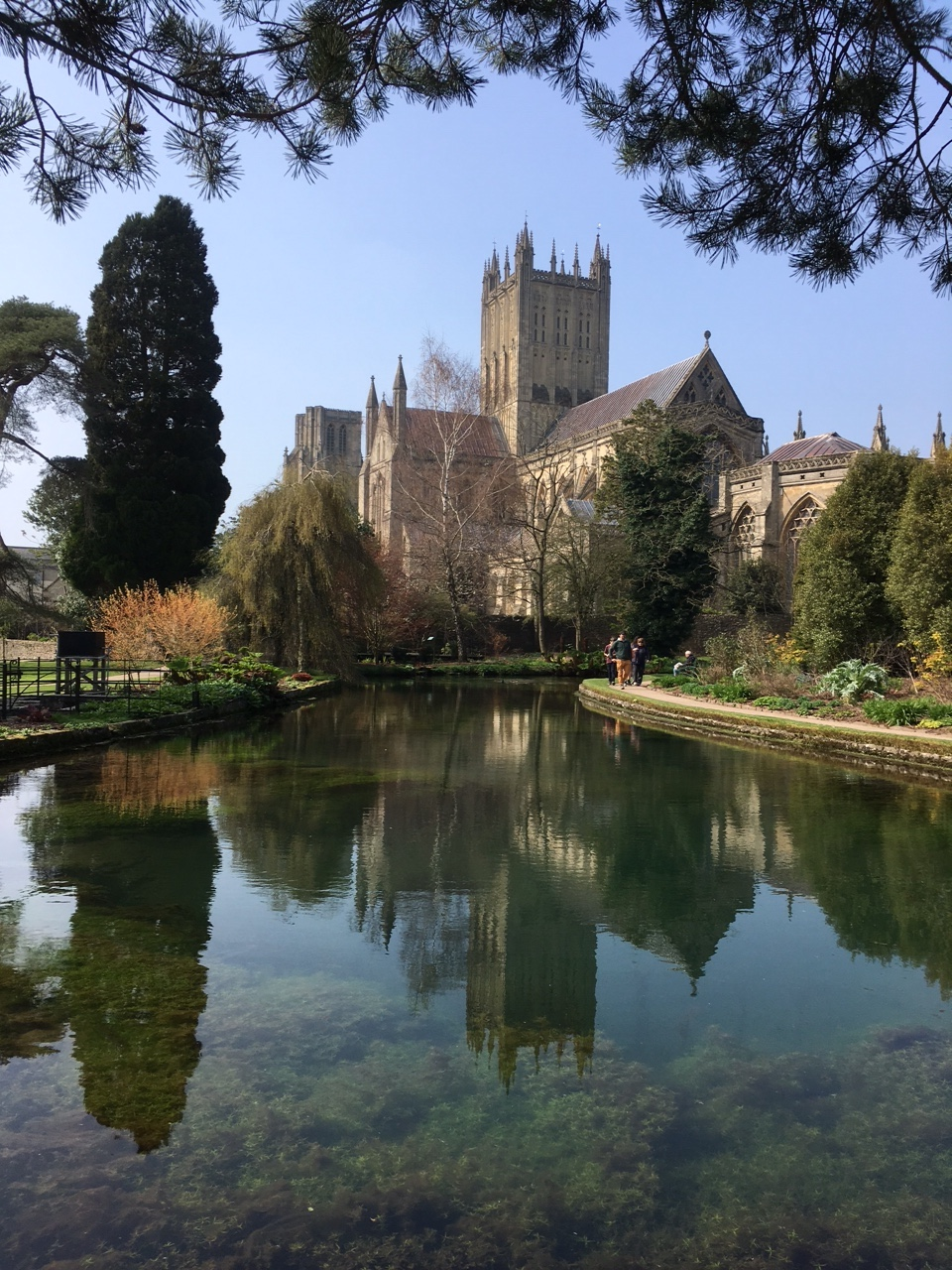Rear view of Wells Cathedral with reflection in one of the wells that Wells takes it's name from.