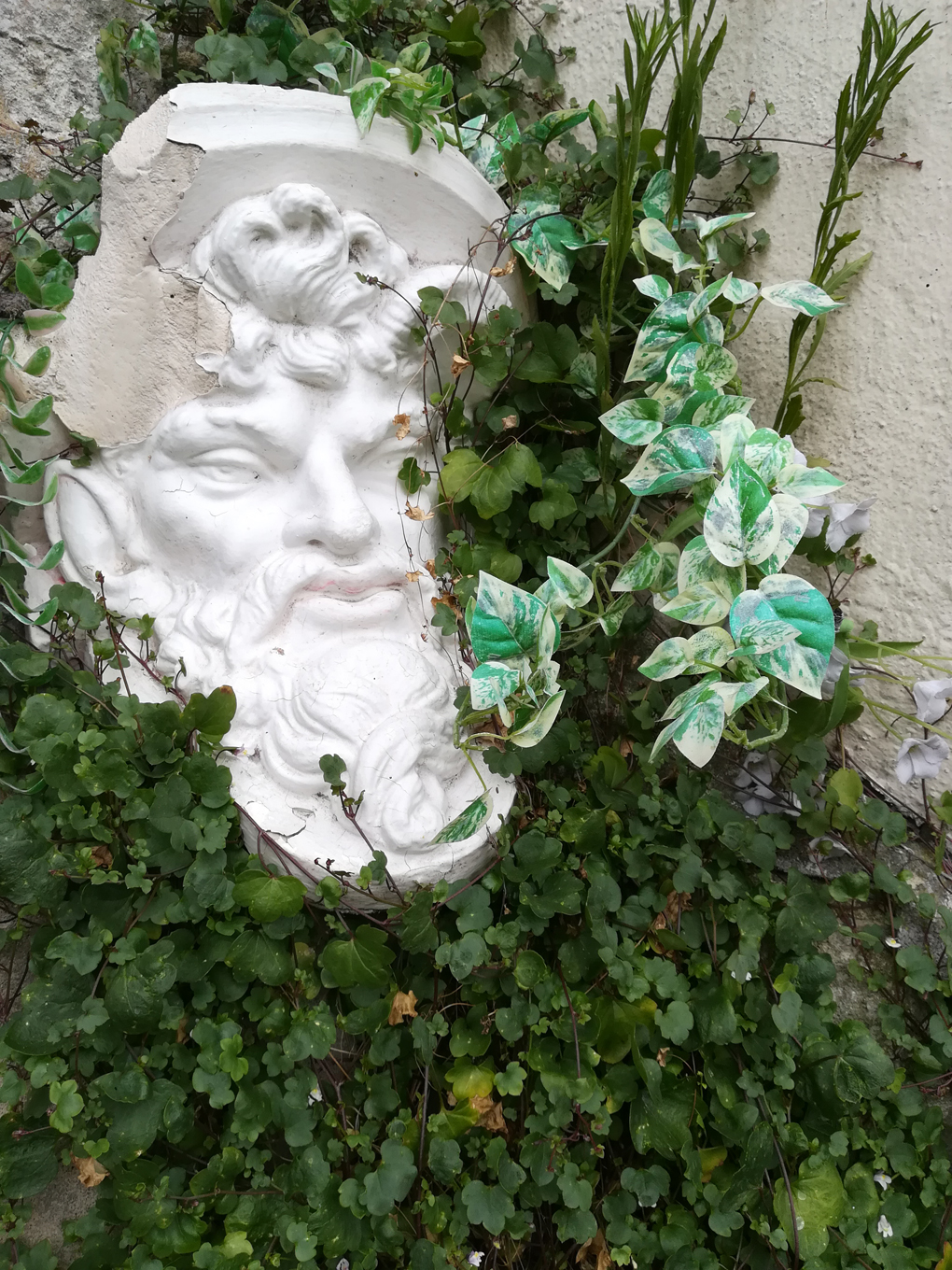 A classical statue head partially covered in vines.