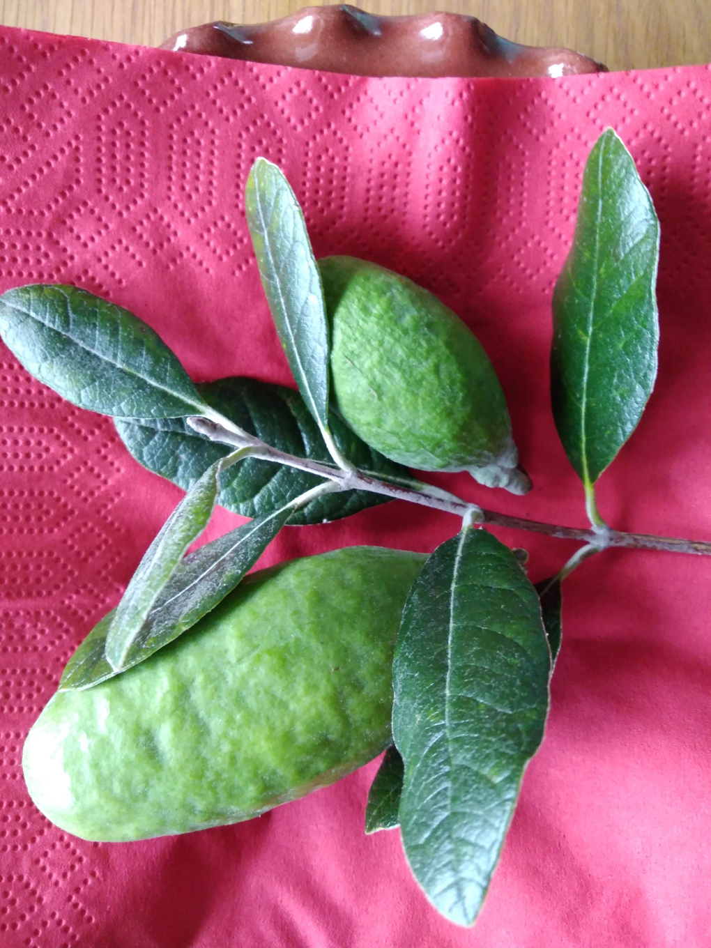 2small oval shaped green fruits with some leaves of the tree