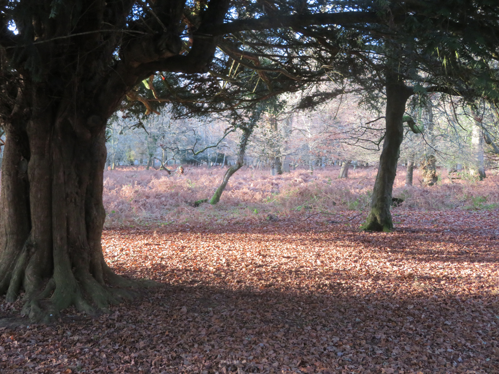 A tree is silhouetted by sunlight in the New Forest