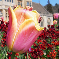 Brightly coloured flowers in front of a stately home