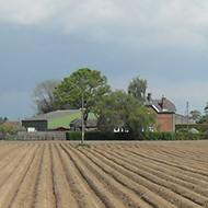 a newly planted field of potatoes