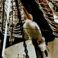 A picture of a lovely old Tall Ship proudly displaying a Pelican as it's figurehead on the prow - they usually have a fair maiden as figurehead so this is unusual. The ship is called The Pelican of London and was a lovely visitor to Bristol, clad in all its rigging.