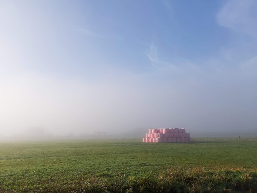 A short wall of large hay, circular bails, wrapped in pink plastic, standing in a field surrounded by mist