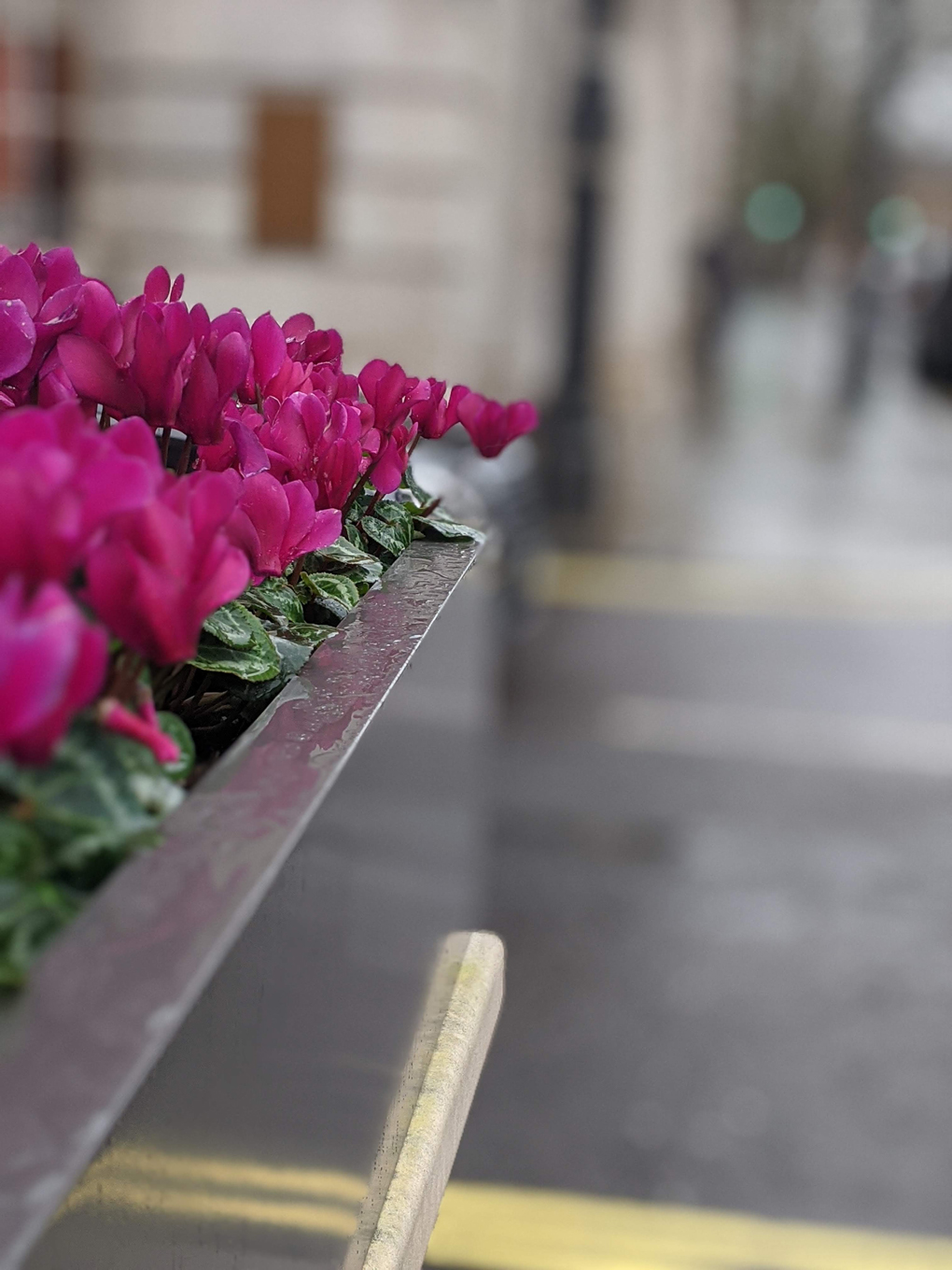 Pink flowers outside the Connaught hotel in Mayfair; blurred background, focus on flowers