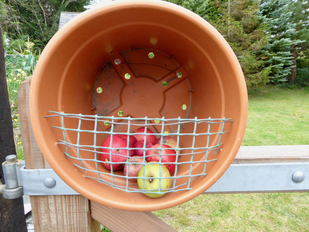 A front-facing, plastic, plant pot containing free apples.