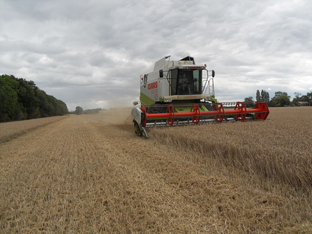 Combine harvester working in wheat field