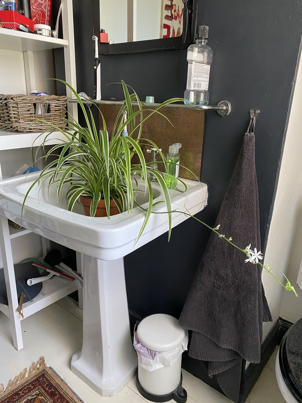 A spider plant sitting in a bathroom sink. One of the spider plants tendrils is stretching out across the bathroom in search of the sun.