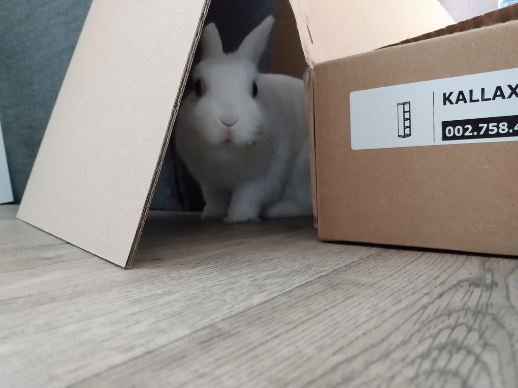A white rabbit peers in an interested manner from behind a large cardboard box