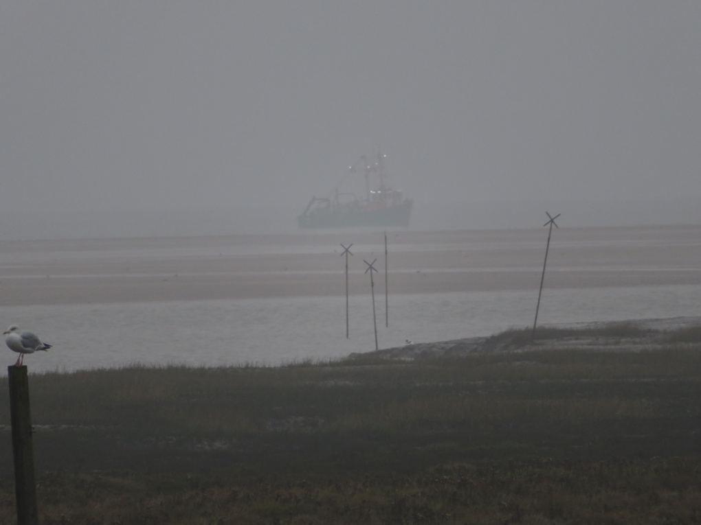 We see acrosss the marshes to a Trawler fishing close to the entrance of Thornham harbour, North Norfolk