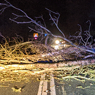 A fallen tree lying across a road.