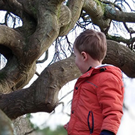boy climbing over exposed tree roots