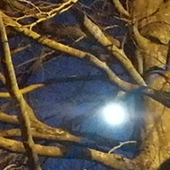 moon through the branches of the trees