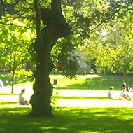 A park on a sunny day with light filtering through the leaves and making patterns on the grass